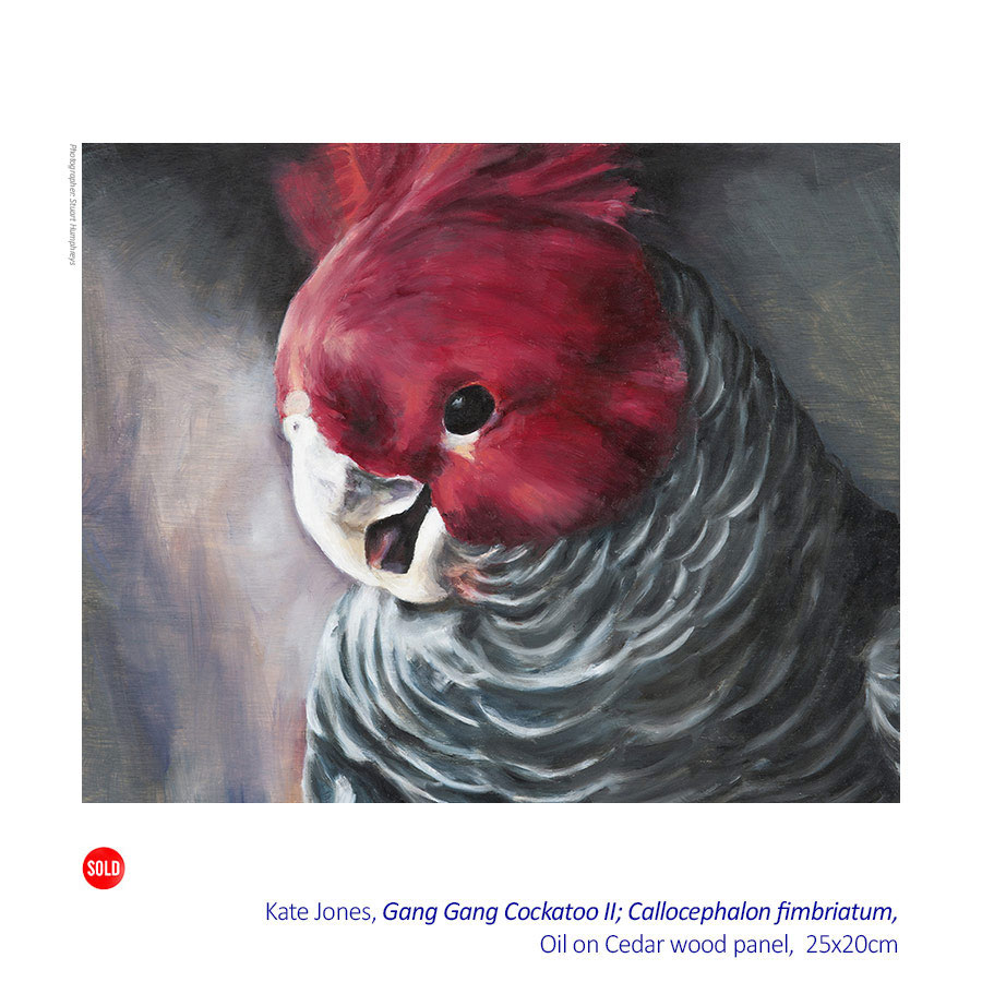 Kate Jones - Ornithology - Solo Exhibition.31 October - 22 November 2015